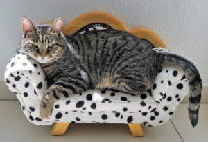 cat-sofa